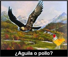 ¿Aguila o pollo?