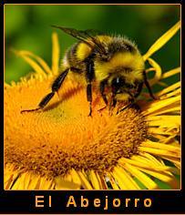 El abejorro...