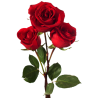 Rosa roja 22